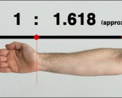 Phi ratio arm