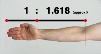 Phi ratio arm